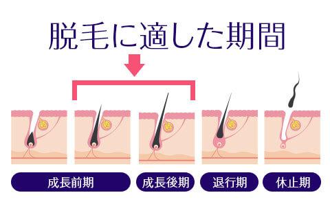 【初心者必見】毛周期がわかれば、効率的な脱毛がわかる!